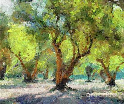 Olive Grove by Dragica Micki Fortuna