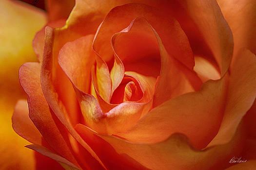 Diana Haronis - Orange Passion