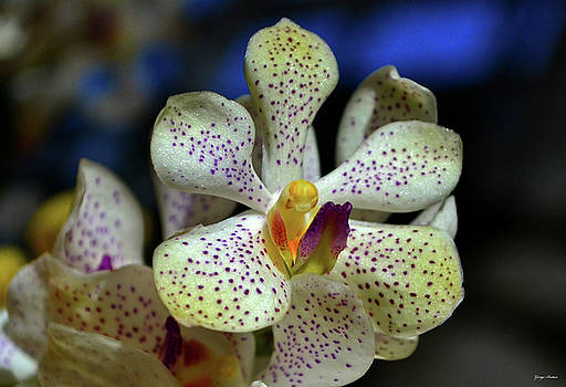 Orchid 030 by George Bostian