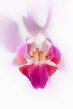 Orchid by John Fotheringham