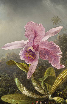 Orchid  by Martin Johnson Heade