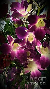 Orchids by Marlene Williams