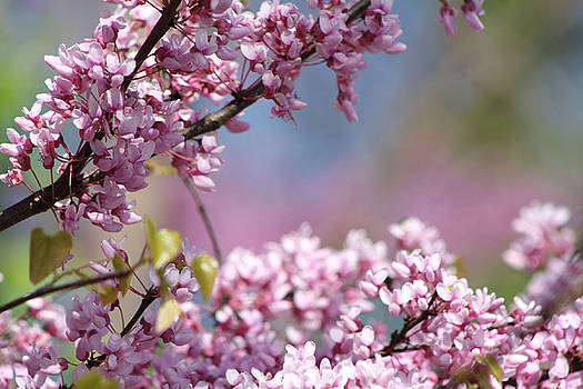 Pastel Blossoms by Michele Wilson
