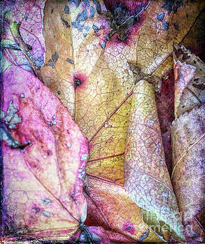 Patterns From Leaves by Todd Breitling