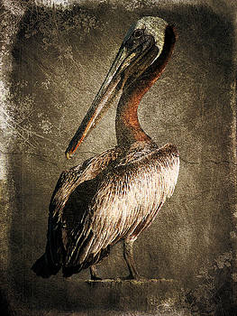 Pelican Life by Gulf Island Photography and Images