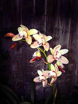 Joyce Dickens - Phalaenopsis Orchids