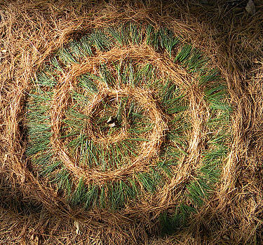 Pine Needle Nautilus  by David  Maynard