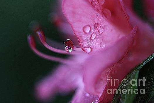 Pink Droplet by Yumi Johnson