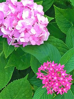 Pink Flowers by Kay Gilley
