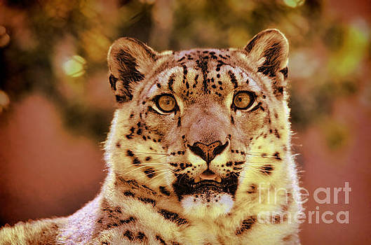 Portrait of a Snow Leopard II by Jim Fitzpatrick