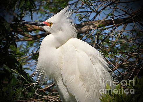 Portrait of An Egret by Lydia Holly
