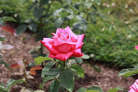 Pretty Bloom by Gerald Mitchell