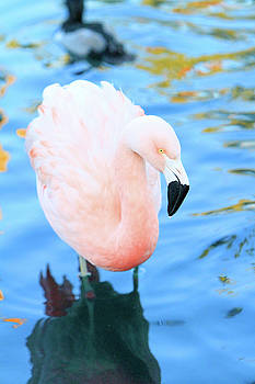 Pretty in Pink by Shoal Hollingsworth