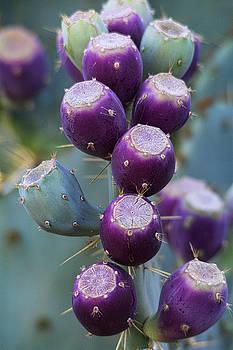 Saija  Lehtonen - Prickly Pear Fruit