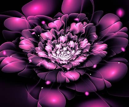 Purple Flower by Anastasiya Malakhova