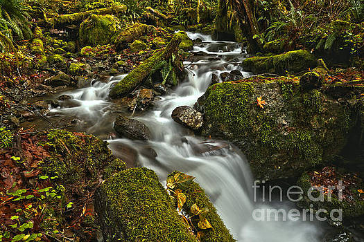 Quinault Stream Cascades by Adam Jewell