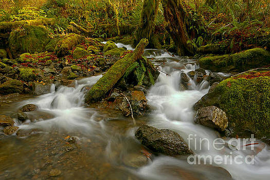 Quinault Streams Through The Forest by Adam Jewell
