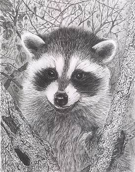 Raccoon Kit by Marlene Piccolin