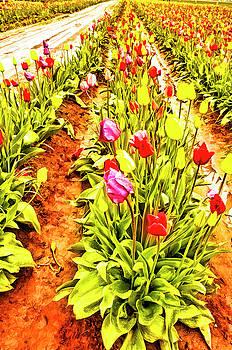 Rainy Day Tulips by Nancy Marie Ricketts