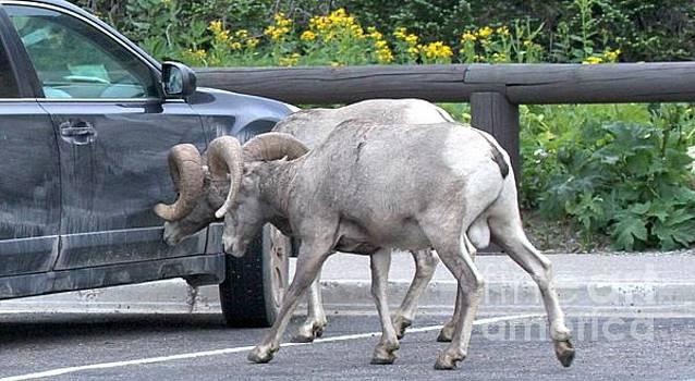 Adam Jewell - Ram Tough Subaru