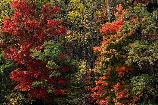 Red by Amanda Kiplinger