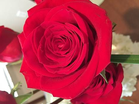 Red, Red Rose by Kay Gilley