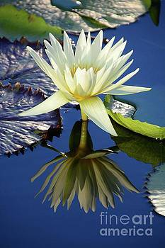 Reflections by Cindy Manero