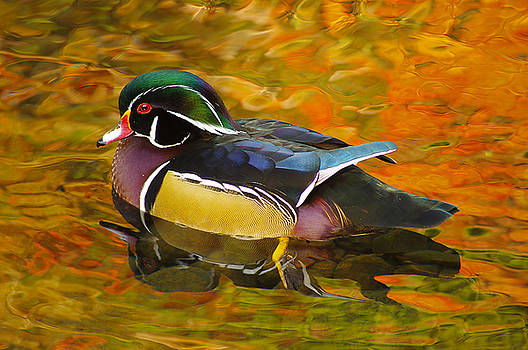 Reflections by Marilyn Peterson