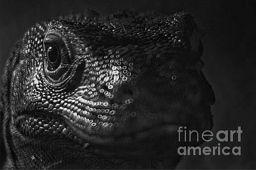 Reptiles by Doc Braham