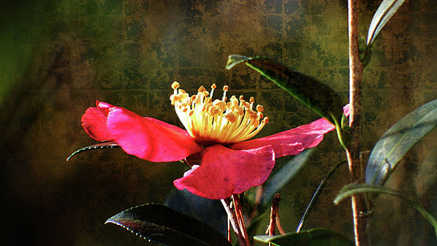 Rhododendron In Bloom by Cathy Harper