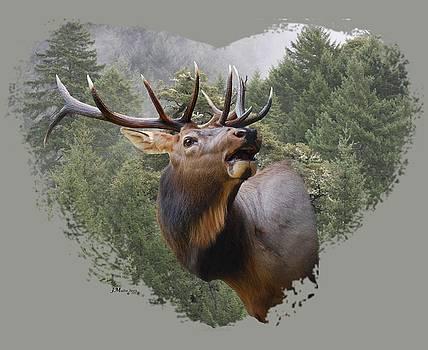 Rocky Mountain Elk by Jennifer Muller