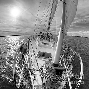Sailing Yacht Fate Beneteau 49 Black and White by Dustin K Ryan