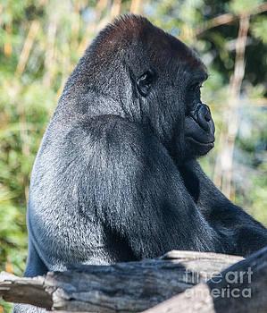 San Diego Zoo, California by Richard Smukler
