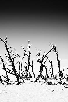 Sand Dune With Dead Trees by Chevy Fleet