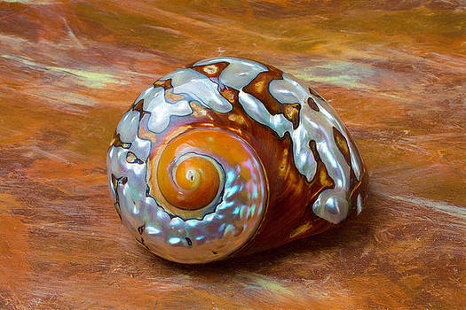 Sea Snail Shell by Garry Gay