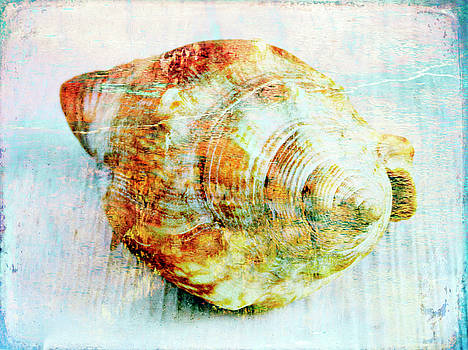 Seashell by Skip Nall