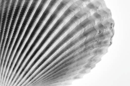 Seashell with backlight by Jouko Mikkola