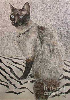 Siamese Cat by Cybele Chaves