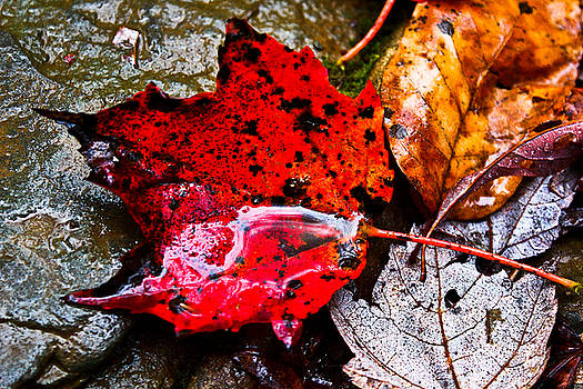 Signs of Autumn by Everett Houser
