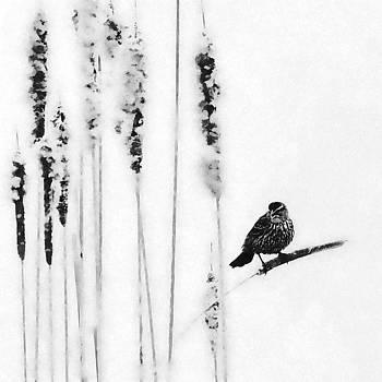 Song Bird  by Andrea Kollo