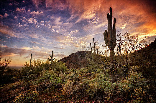 Sonoran Skies Alive With Color  by Saija Lehtonen