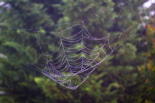 Spider Web by Dan P Brodt Photography