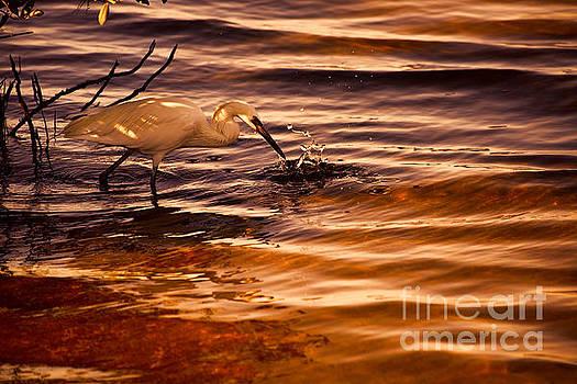 Splashing About V2 by Douglas Barnard