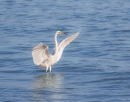 Kim Hojnacki - Spread Your Wings