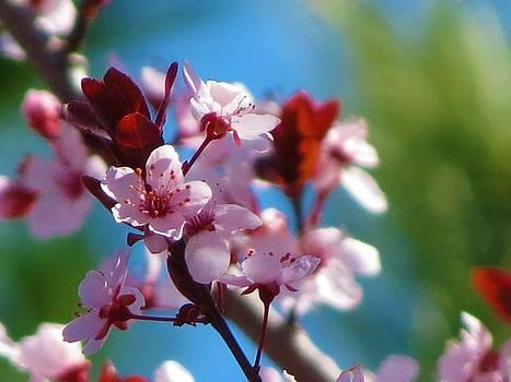 Spring Blossoms by Vijay Sharon Govender