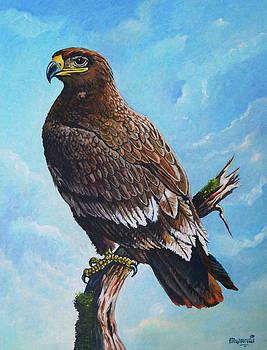 Steppe-Eagle by Anthony Mwangi