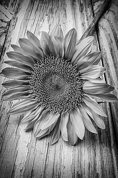Sunflower Black And White by Garry Gay