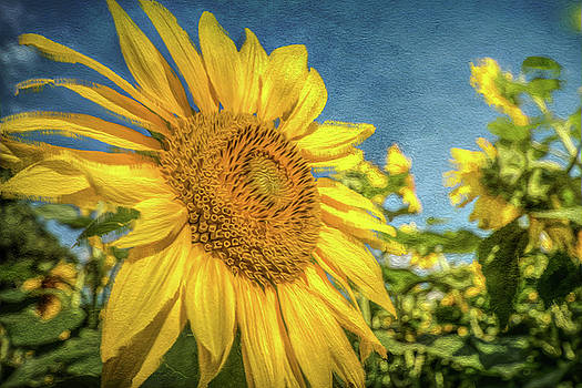 Sunflower by Jerri Moon Cantone