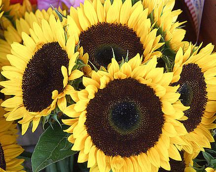 Sunflowers by Tom Romeo