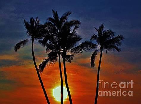 Sunlit Palms by Craig Wood